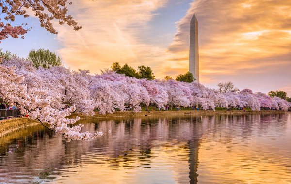 Why Spring Is A Great Time to Be a D.C. Intern