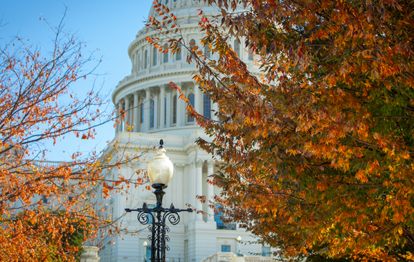 Shot of foliage in front of the capitol during the Fall